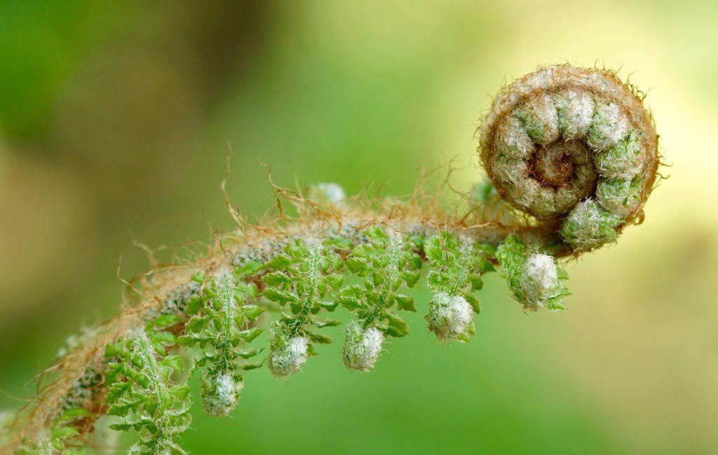 développement personnel plante verte